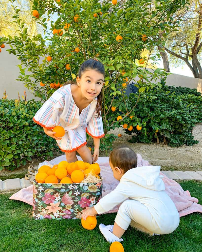things to do with your kids - fruit picking