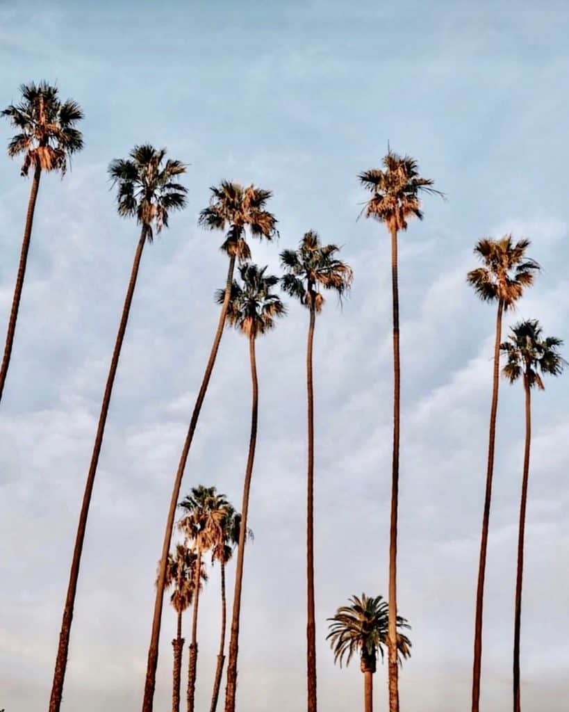 Santa Monica - 3 Days in Los Angeles guide
