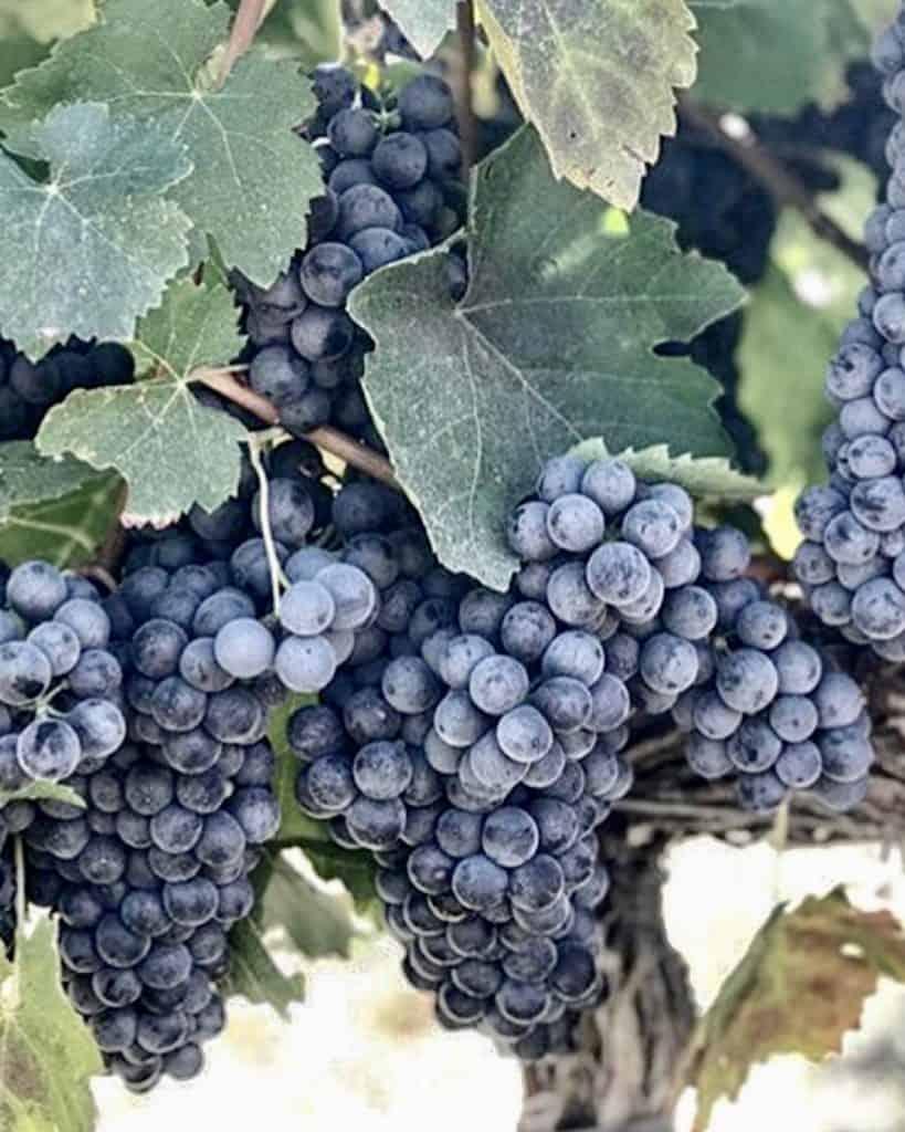 3 Days In Los Angeles itinerary - wine tasting at Santa Barbara