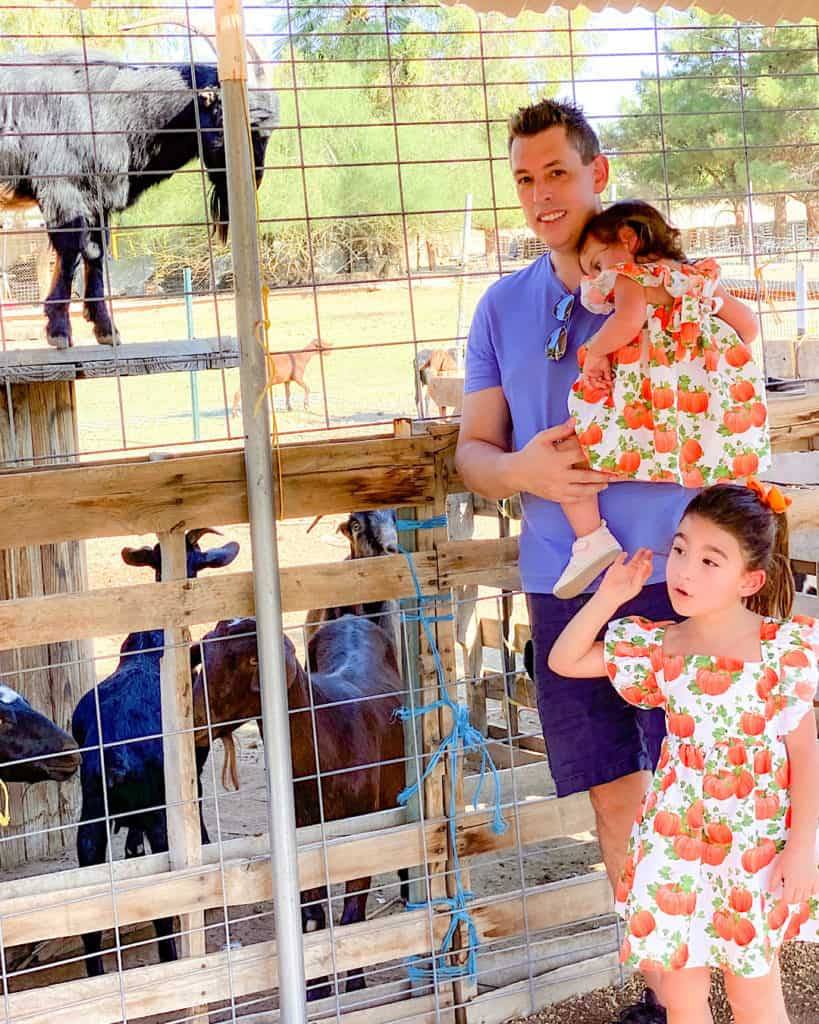 Family day out at the Pumpkin patch: visiting the cute animals