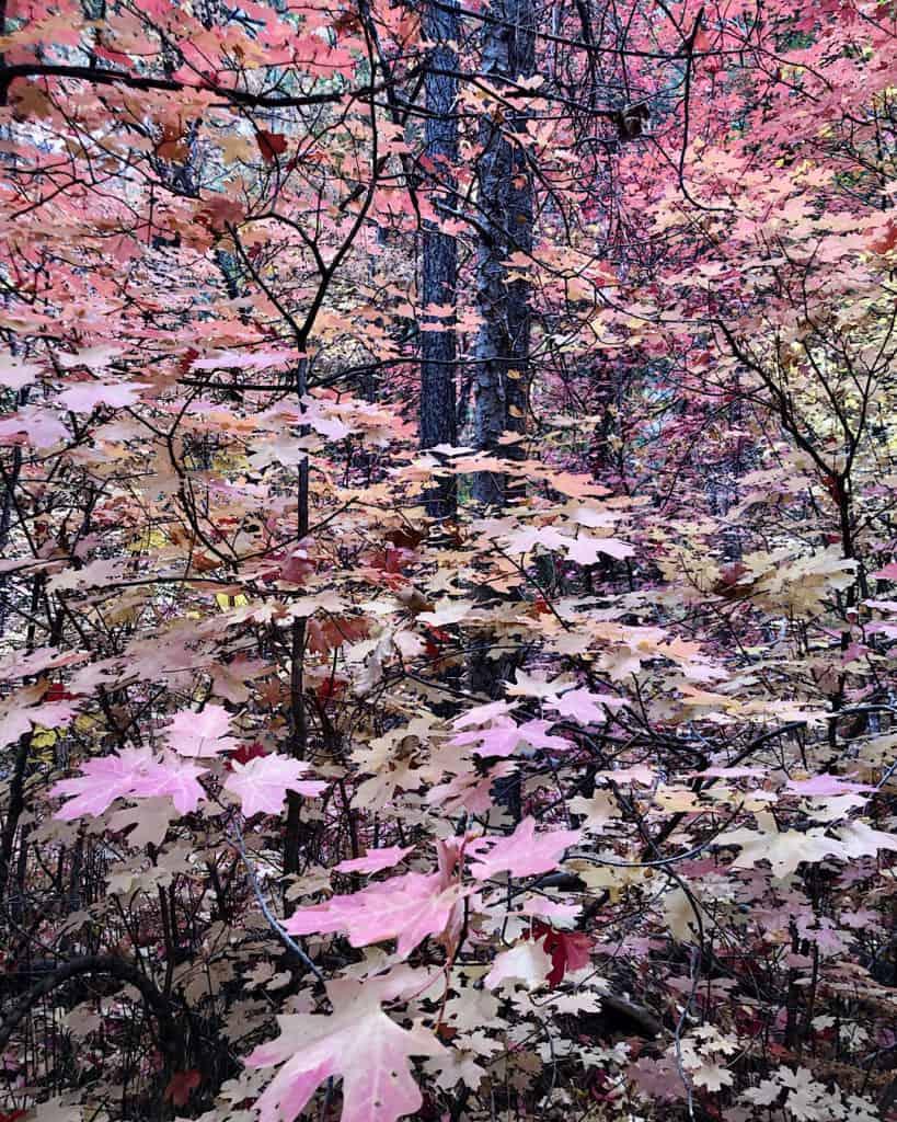 Fall foliage in Sedona, Arizona. Great for hikers.