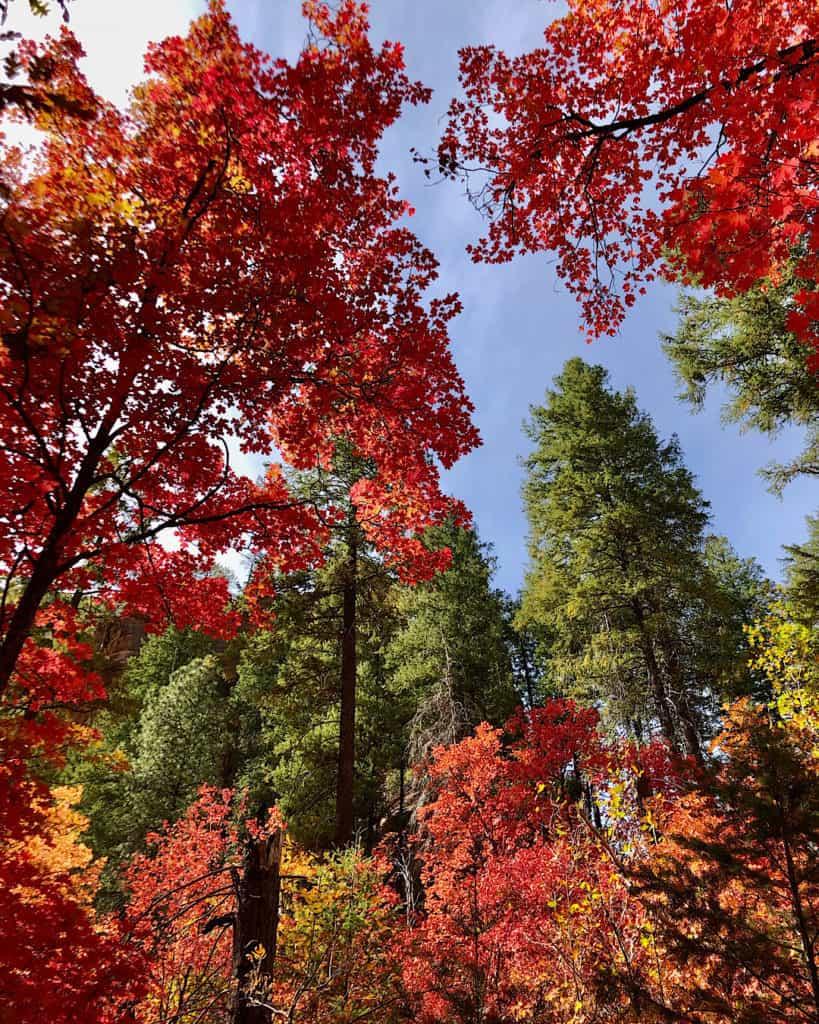Best Time to Visit Sedona Arizona to see the fall foliage: October - November