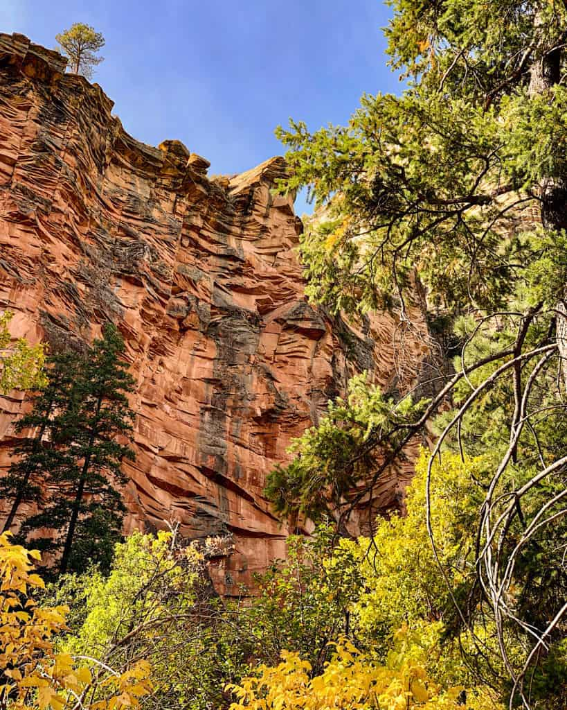 Best Time to Visit Sedona Arizona: Fall to see the red rocks and pines